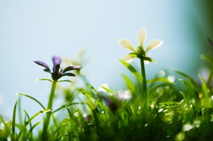 Flowers & Fresh Spring Air in Minneapolis
