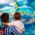 Visit an Aquarium to Stay Warm in Minnesota in the Spring.